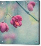 Spindle Tree Acrylic Print