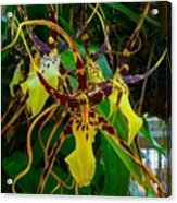 Spindly Orchid Acrylic Print