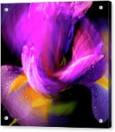 Spinning Iris Acrylic Print