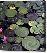 Spinning Lilies Acrylic Print