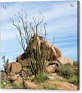 Spiny Cactus East Of Wickenburg Acrylic Print
