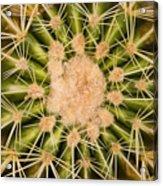Spiny Cactus Needles Acrylic Print