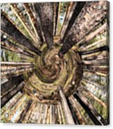 Spiral Of Forest Acrylic Print