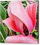 Spiral Pink Tulips Acrylic Print
