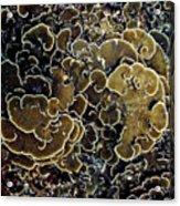 Spirals In Corals Acrylic Print