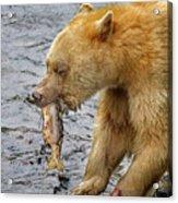 Spirit Bear Take Out  9636 Acrylic Print