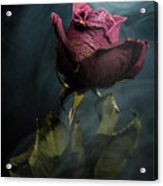 Spirit Of A Dying Rose Acrylic Print