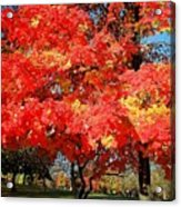 Spirit Of Fall Acrylic Print