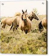 Spirit Of The Horse Acrylic Print
