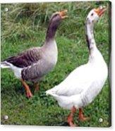 Spirited Geese Acrylic Print