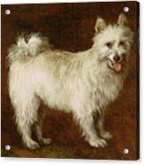 Spitz Dog Acrylic Print by Thomas Gainsborough