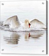 Splash Landing I Acrylic Print