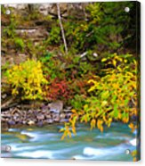 Splash Of Color Along The Creek Acrylic Print