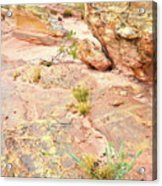 Splash Of Color In Valley Of Fire's Wash 3 Acrylic Print