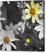 Splash Of Yellow Acrylic Print