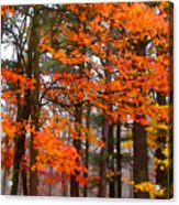 Splashes Of Autumn Acrylic Print