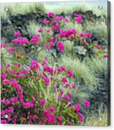 Splashes Of Pink Acrylic Print