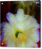 Splendid  Flower Of Cactus. Acrylic Print