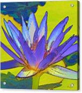 Splendid Water Lily Acrylic Print