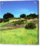 Splendor In The Grass Acrylic Print by Kathy Yates
