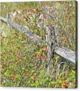 Split Rail Fence And Poison Ivy Acrylic Print
