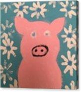 Sponge Pig Acrylic Print