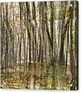 Spooky Woods Acrylic Print