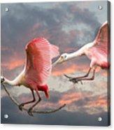 Spoonbill Fantasy #2 Acrylic Print