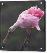 Spoonbill In Rain Acrylic Print