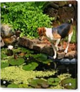 Sporty At The Lily Pond Acrylic Print