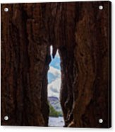 Spot The Lake Shore View Through The Hollow Tree Trunk Acrylic Print