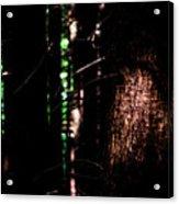 Spotlight In The Woods Acrylic Print