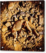 Spotlight On A Extinct Stegosaurus Acrylic Print