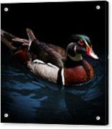 Spotlight On A Wood Duck Acrylic Print