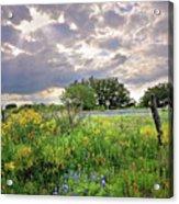 Spotlight On Spring Acrylic Print