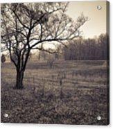 Spotsylvania Battlefield Acrylic Print