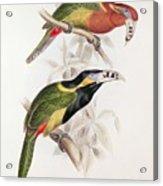 Spotted Bill Aracari Acrylic Print by Edward Lear