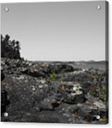 Spotted Rocks Acrylic Print