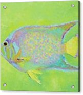 Spotted Tropical Fish Acrylic Print
