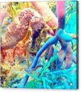 Spotty Seahorse Acrylic Print