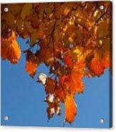 Spray Of Autumn Leaves  Acrylic Print