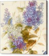 Spray Of Lilac Acrylic Print