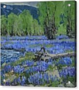 Spread Creek Lupine Acrylic Print