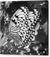 Spread You Wings And Fly Acrylic Print