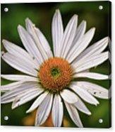 Spread Your Petals Acrylic Print