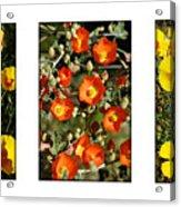 Spring - Desert Style 2 Acrylic Print