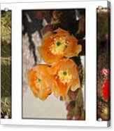 Spring - Desert Style Acrylic Print