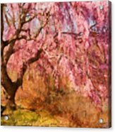 Spring - Sakura - A Beautiful Spring Day  Acrylic Print by Mike Savad
