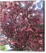 Spring 12 Acrylic Print