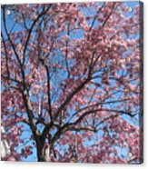 Spring 4 Acrylic Print